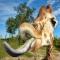 HornyGiraffe