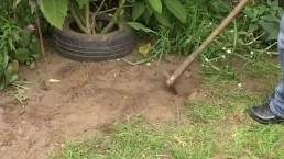 Mature Widower Takes Advantage Of The Young Gardener
