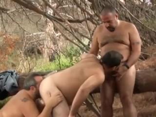 Bears of Spain