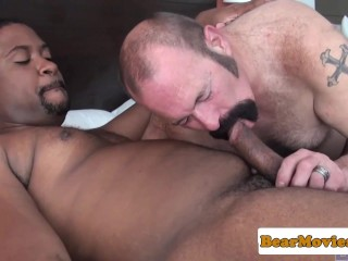 Black bear ass pounding white inked bottom
